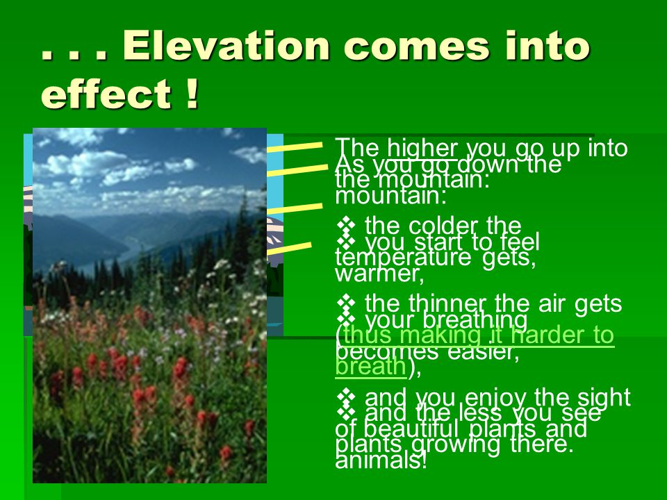 . . . Elevation comes into effect !