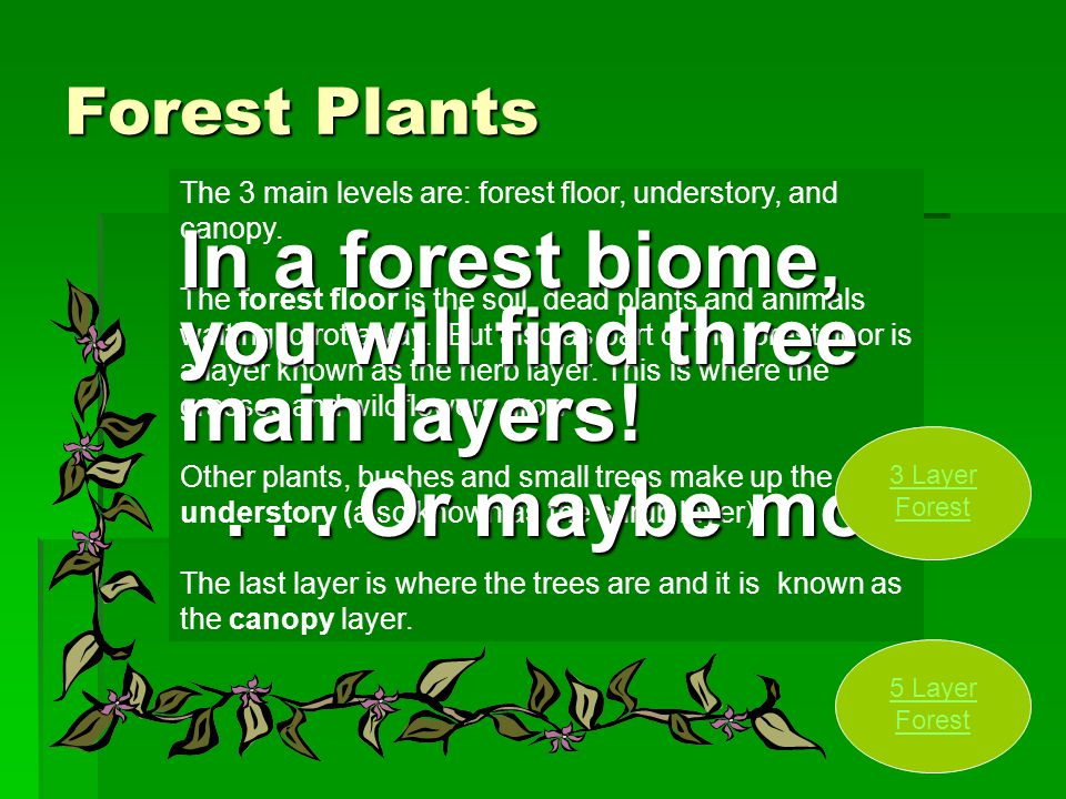 In a forest biome, you will find three main layers!