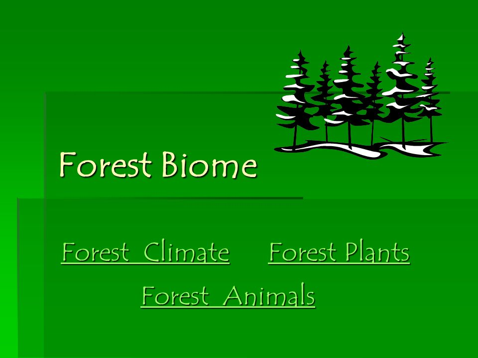 Forest Biome Forest Climate Forest Plants Forest Animals