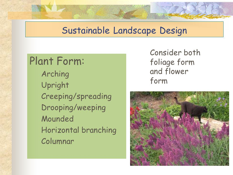 Sustainable Landscape Design