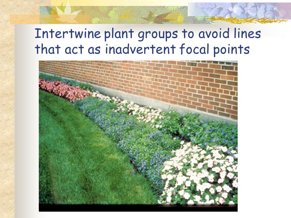 Intertwine plant groups to avoid lines that act as inadvertent focal points