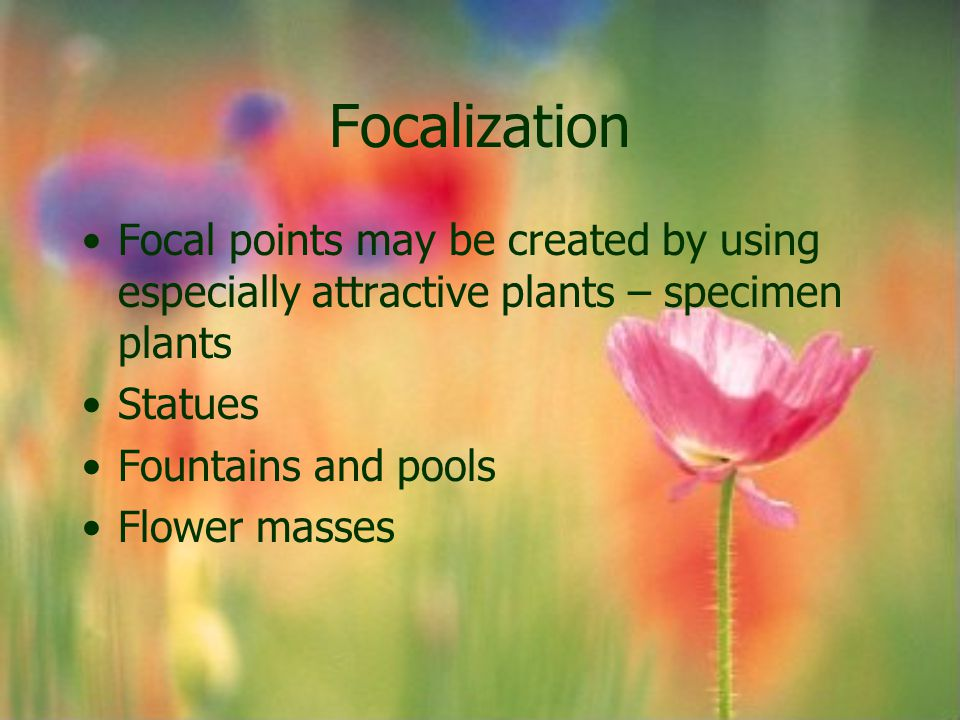 Focalization Focal points may be created by using especially attractive plants – specimen plants. Statues.