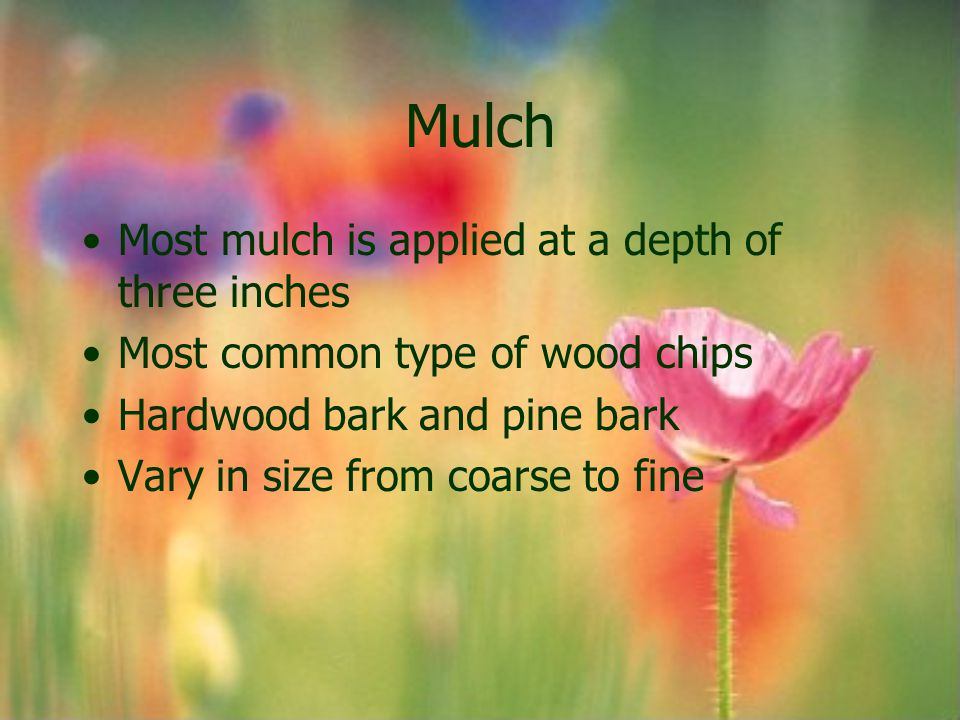 Mulch Most mulch is applied at a depth of three inches