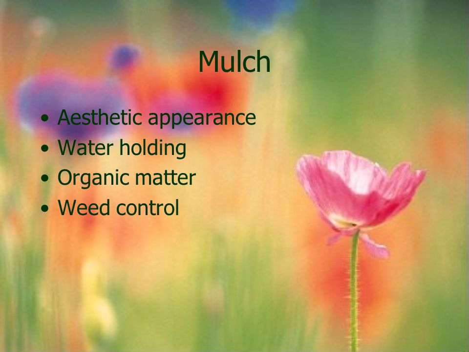 Mulch Aesthetic appearance Water holding Organic matter Weed control