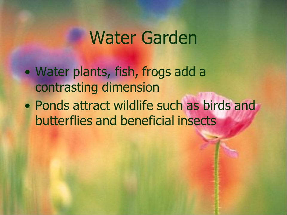 Water Garden Water plants, fish, frogs add a contrasting dimension