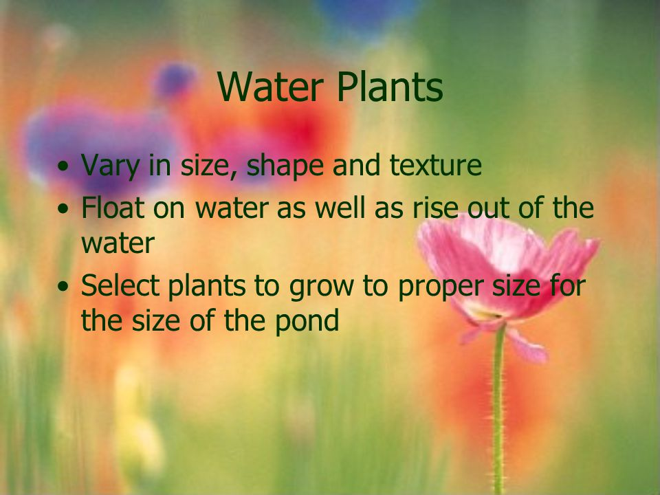 Water Plants Vary in size, shape and texture