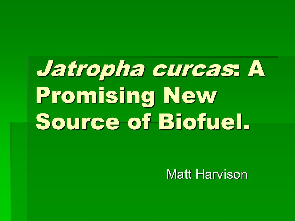 Jatropha curcas: A Promising New Source of Biofuel.