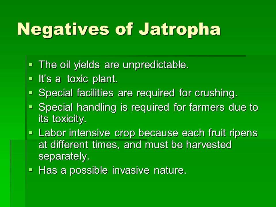 Negatives of Jatropha The oil yields are unpredictable.