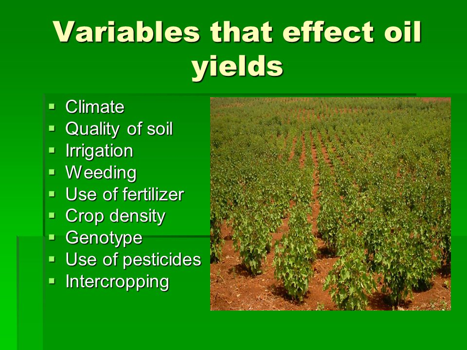 Variables that effect oil yields