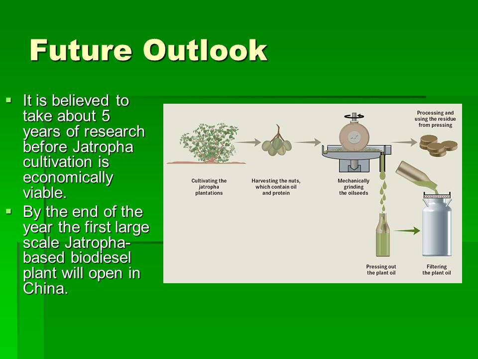 Future Outlook It is believed to take about 5 years of research before Jatropha cultivation is economically viable.