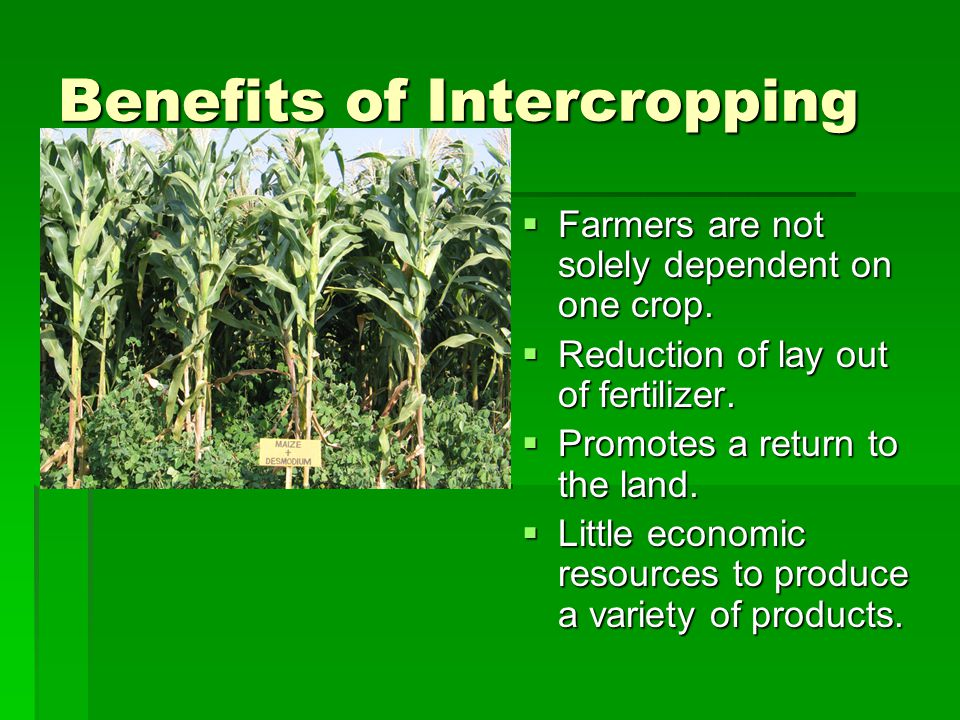Benefits of Intercropping