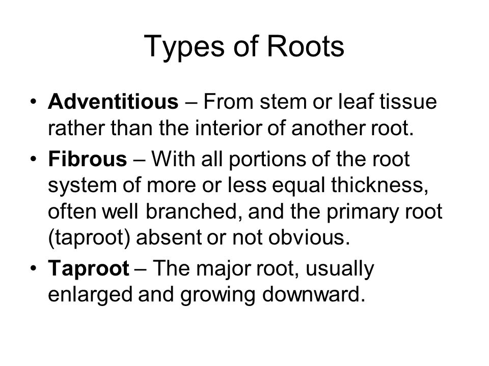 Types of Roots Adventitious – From stem or leaf tissue rather than the interior of another root.