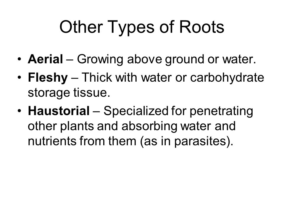 Other Types of Roots Aerial – Growing above ground or water.