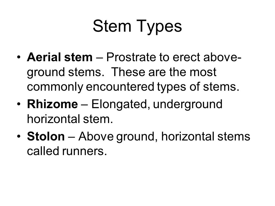 Stem Types Aerial stem – Prostrate to erect above-ground stems. These are the most commonly encountered types of stems.