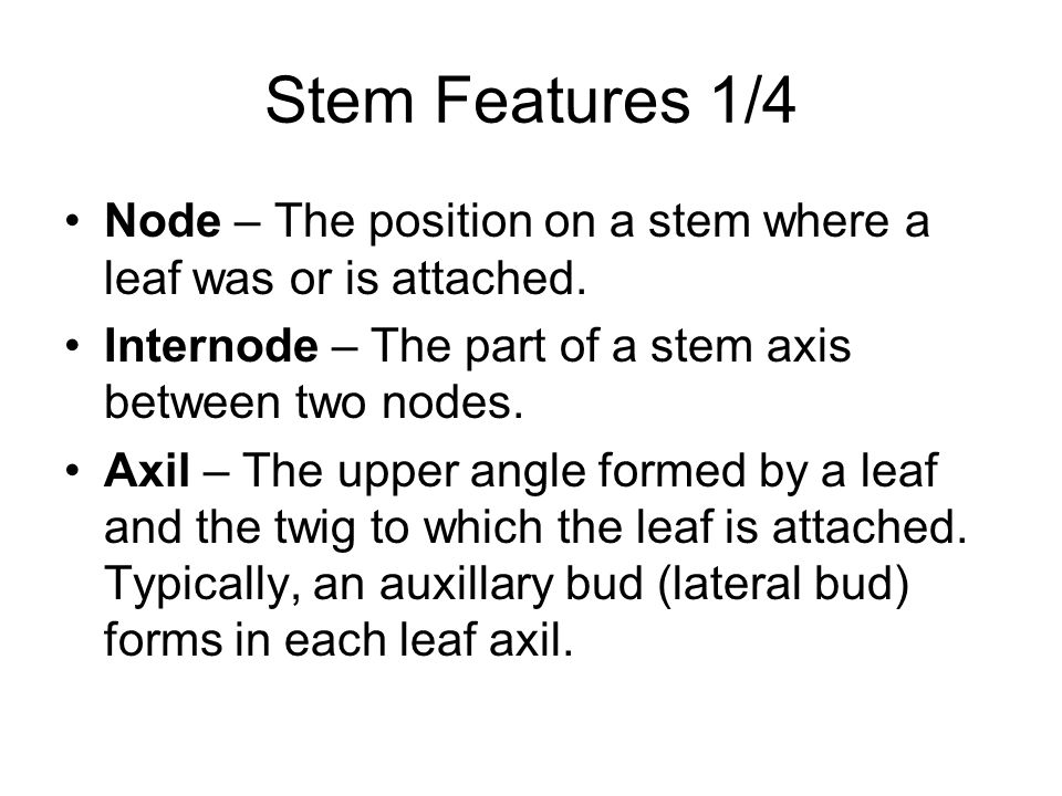 Stem Features 1/4 Node – The position on a stem where a leaf was or is attached. Internode – The part of a stem axis between two nodes.