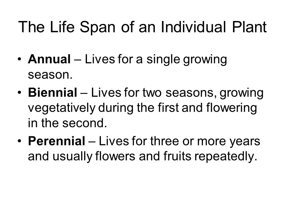 The Life Span of an Individual Plant