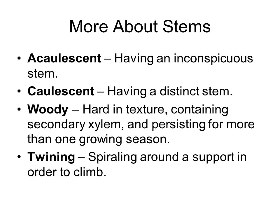 More About Stems Acaulescent – Having an inconspicuous stem.