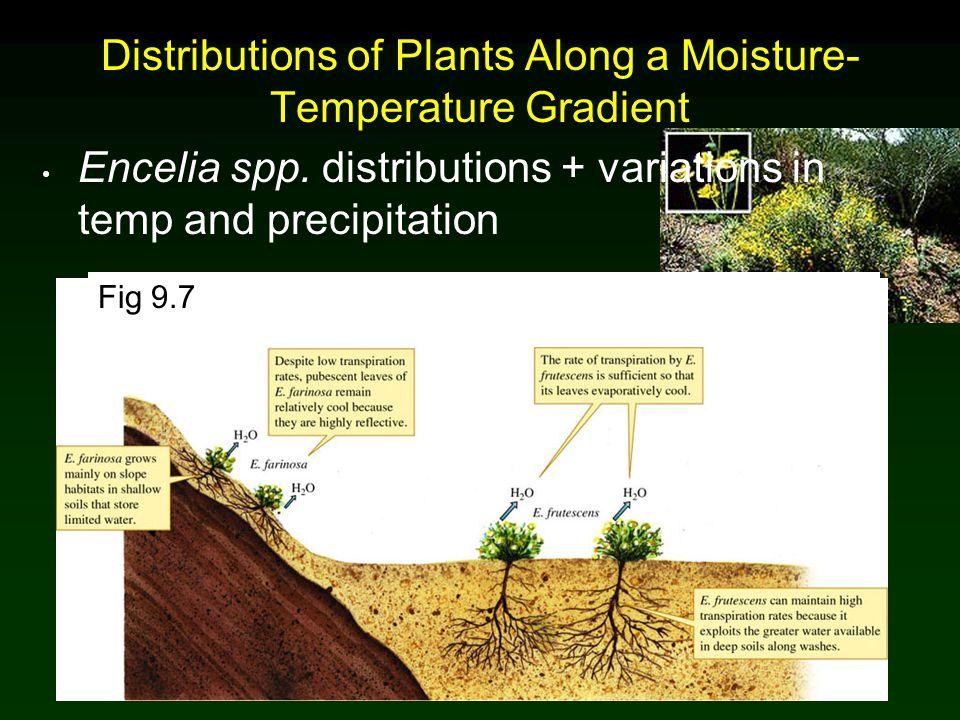 Distributions of Plants Along a Moisture-Temperature Gradient