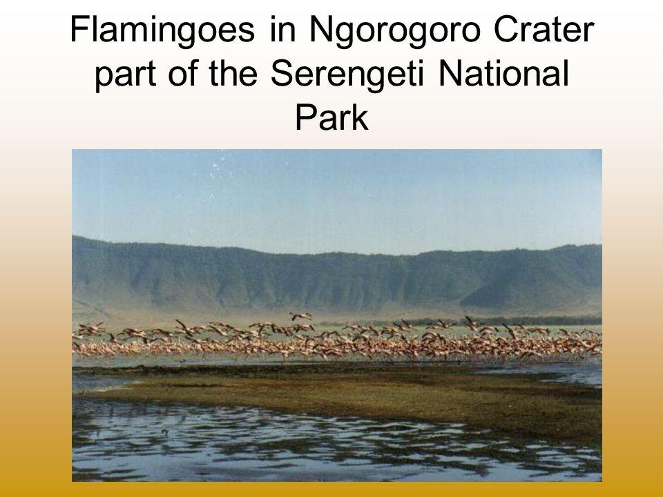 Flamingoes in Ngorogoro Crater part of the Serengeti National Park