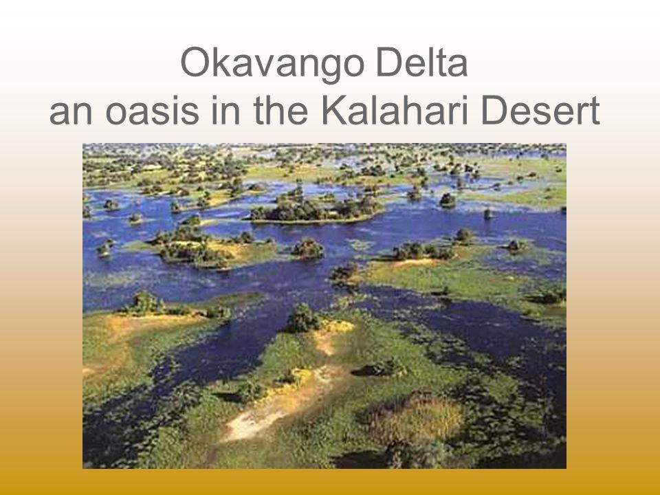 Okavango Delta an oasis in the Kalahari Desert