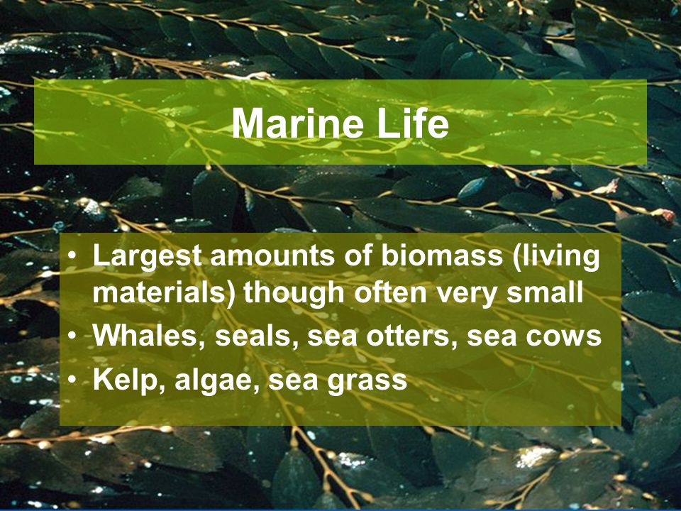 Marine Life Largest amounts of biomass (living materials) though often very small. Whales, seals, sea otters, sea cows.