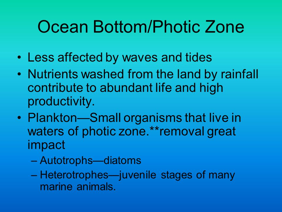 Ocean Bottom/Photic Zone
