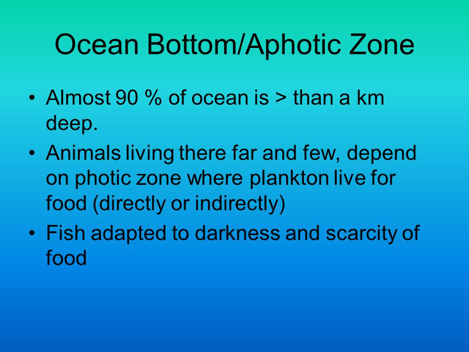 Ocean Bottom/Aphotic Zone