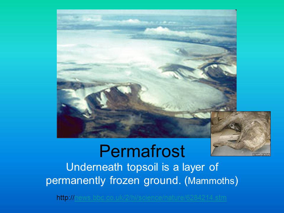Underneath topsoil is a layer of permanently frozen ground. (Mammoths)