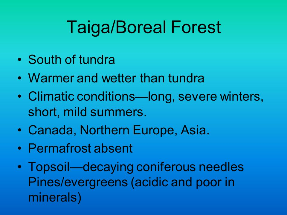 Taiga/Boreal Forest South of tundra Warmer and wetter than tundra