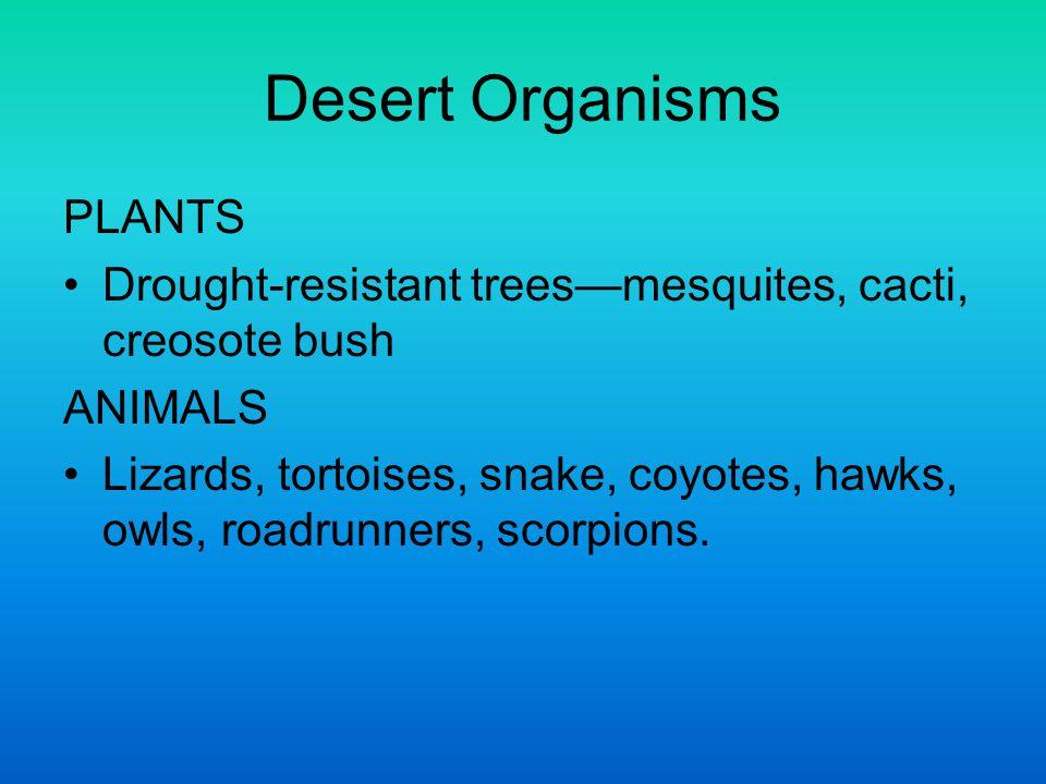 Desert Organisms PLANTS