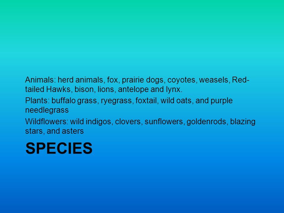 Animals: herd animals, fox, prairie dogs, coyotes, weasels, Red-tailed Hawks, bison, lions, antelope and lynx.