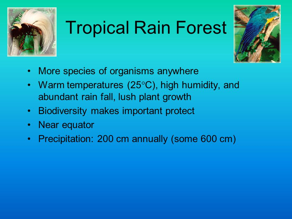 Tropical Rain Forest More species of organisms anywhere
