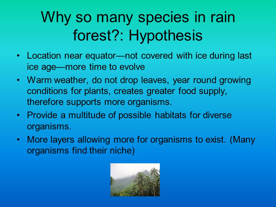 Why so many species in rain forest : Hypothesis