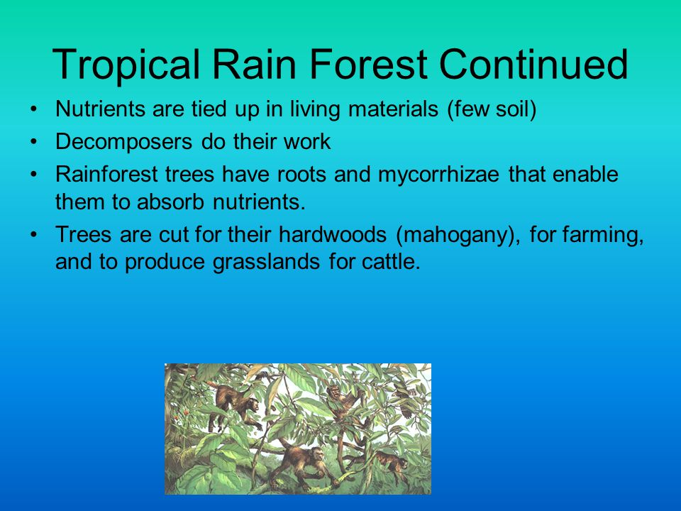 Tropical Rain Forest Continued