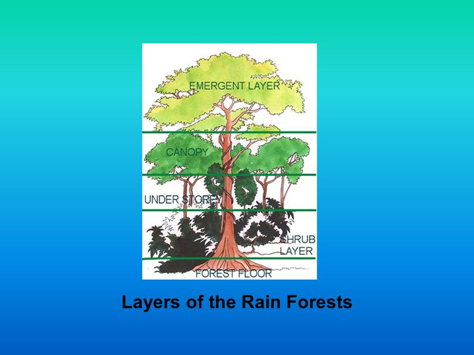 Layers of the Rain Forests
