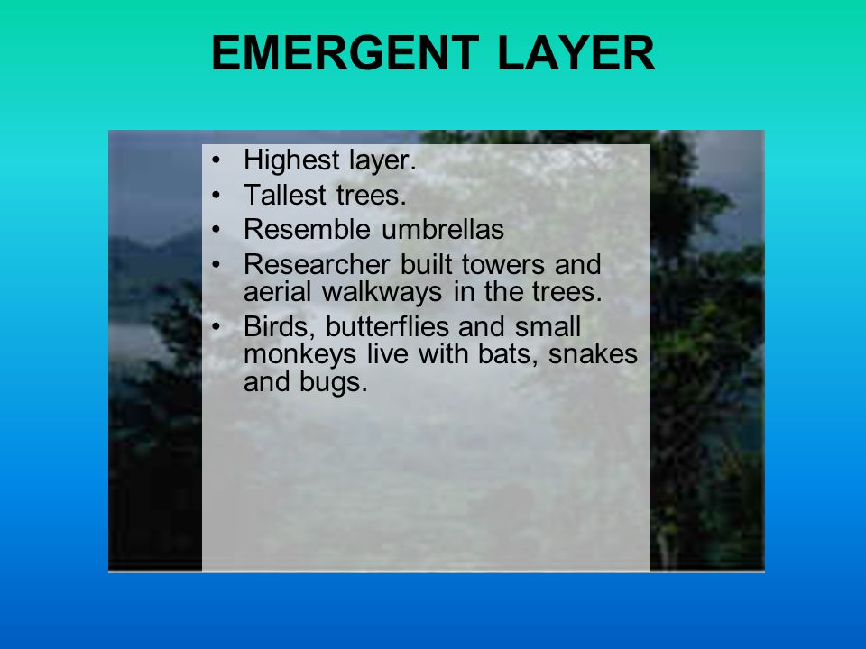 EMERGENT LAYER Highest layer. Tallest trees. Resemble umbrellas