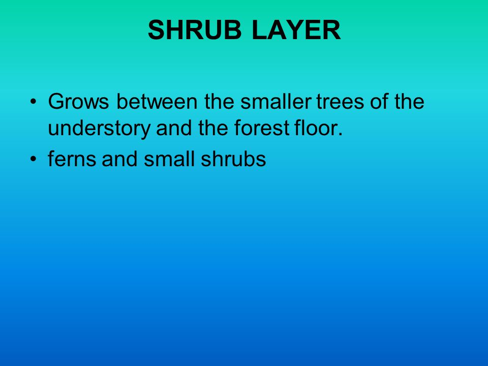SHRUB LAYER Grows between the smaller trees of the understory and the forest floor.