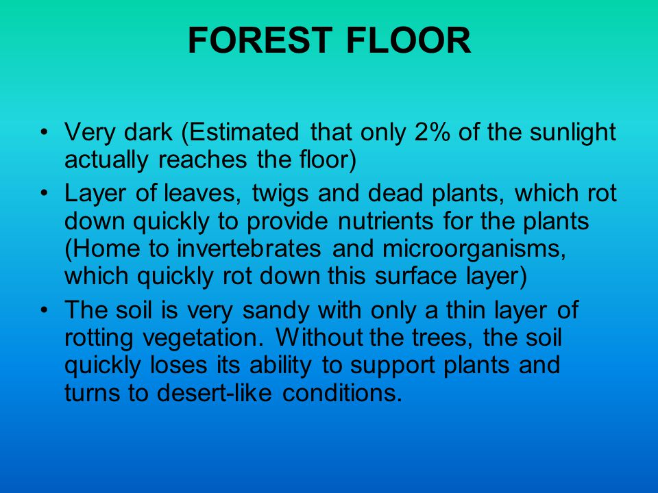 FOREST FLOOR Very dark (Estimated that only 2% of the sunlight actually reaches the floor)