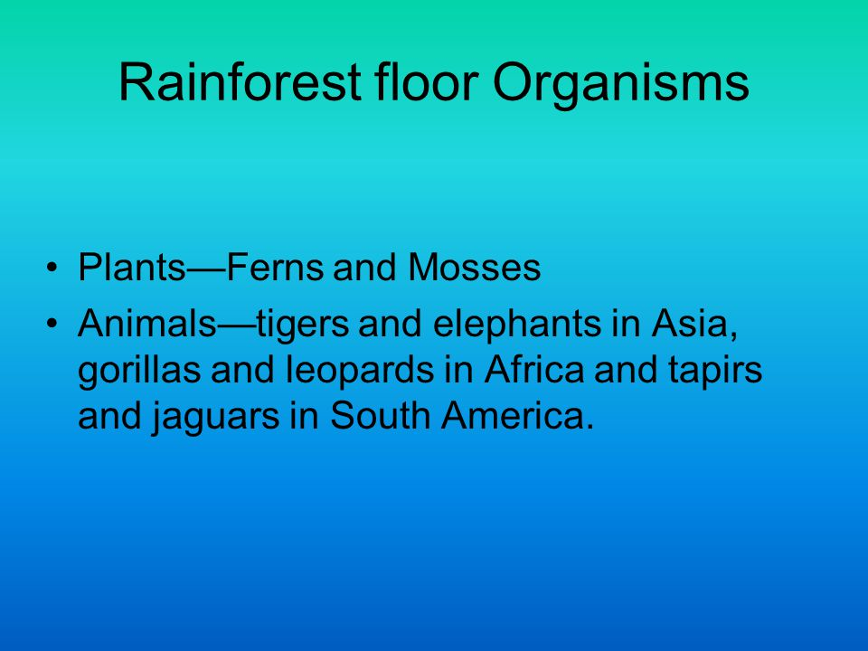 Rainforest floor Organisms