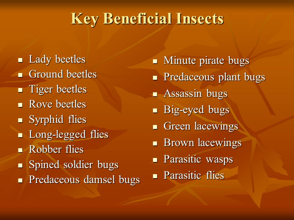Key Beneficial Insects