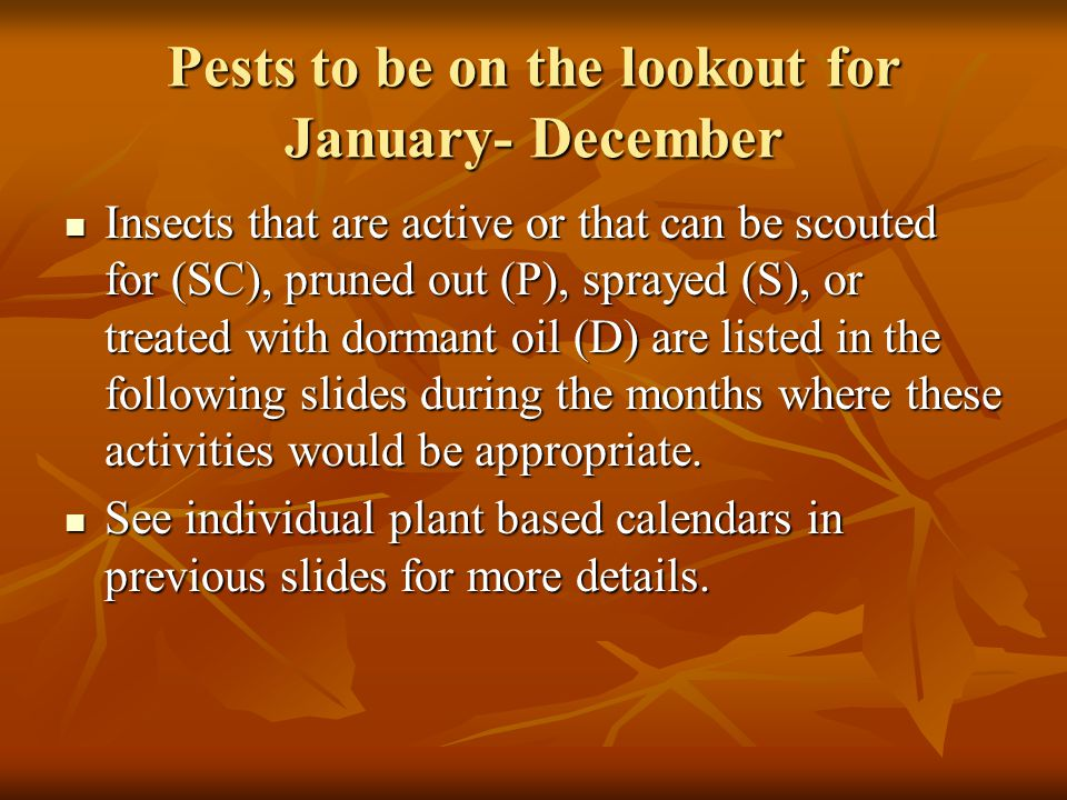 Pests to be on the lookout for January- December