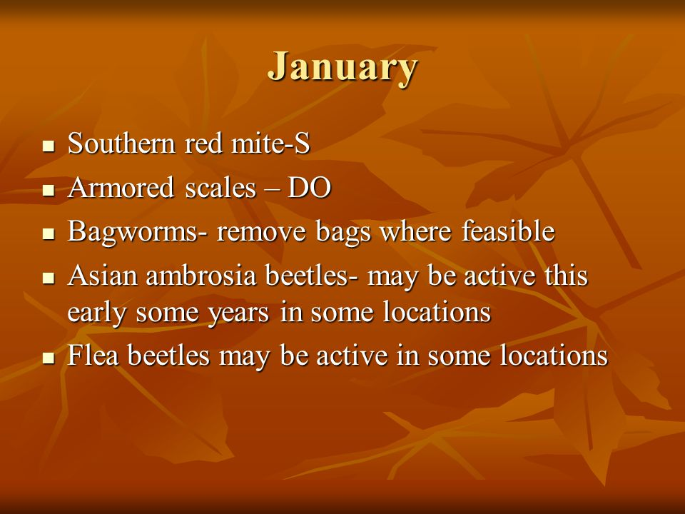 January Southern red mite-S Armored scales – DO