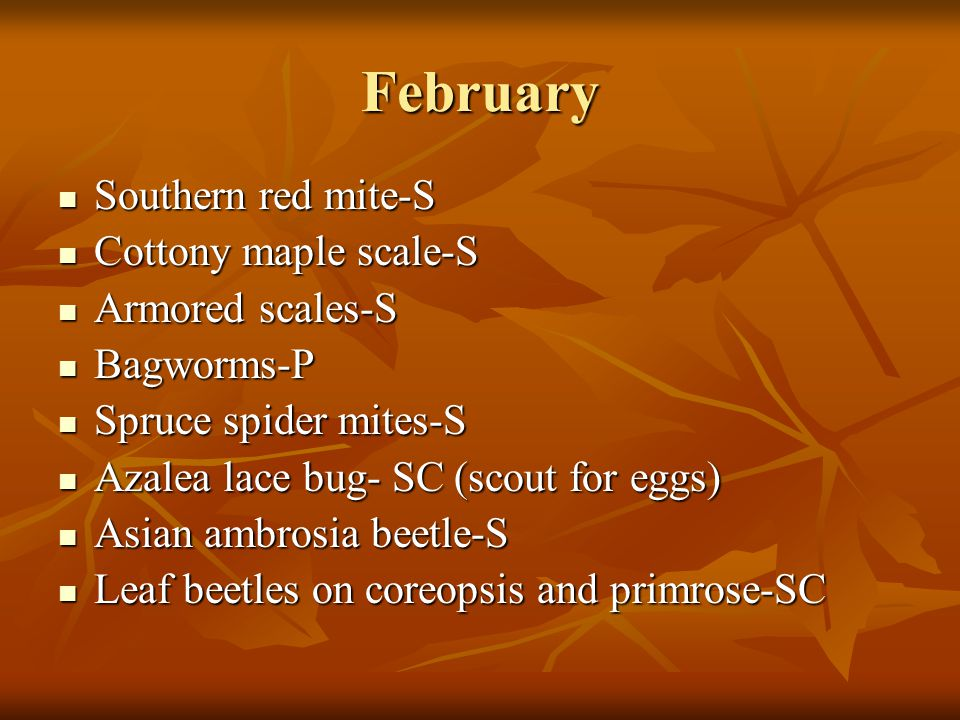 February Southern red mite-S Cottony maple scale-S Armored scales-S