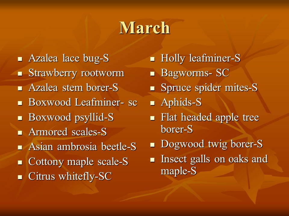 March Azalea lace bug-S Strawberry rootworm Azalea stem borer-S
