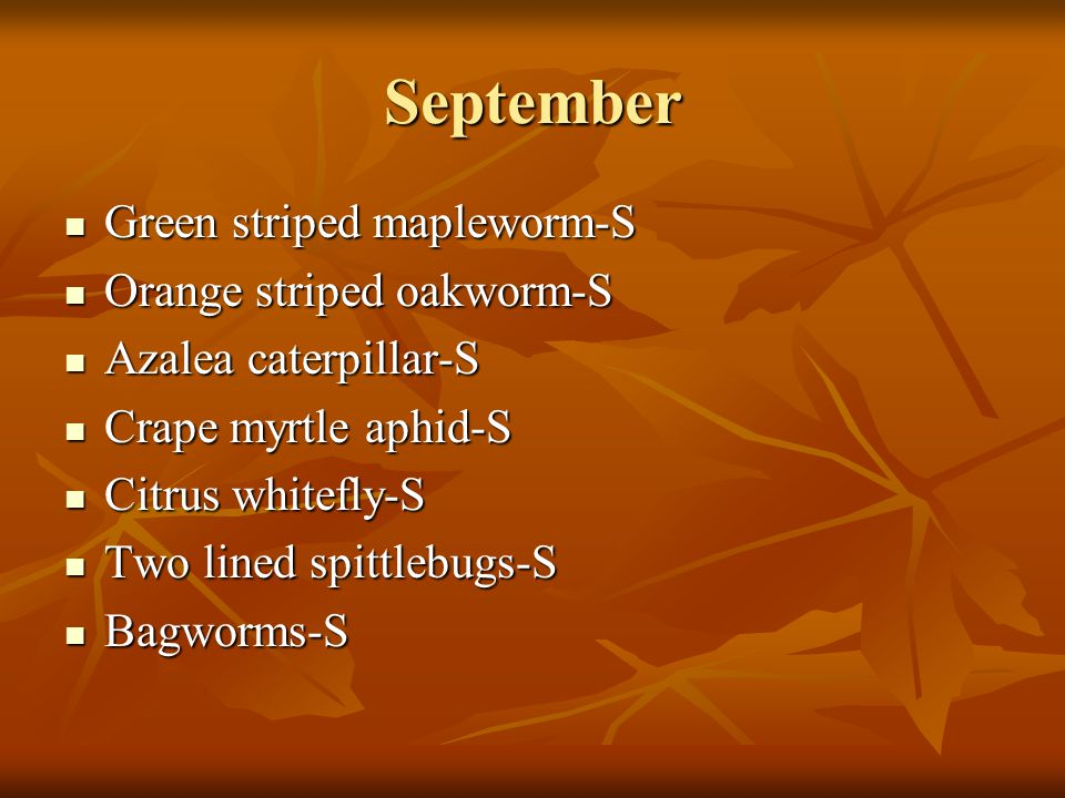 September Green striped mapleworm-S Orange striped oakworm-S