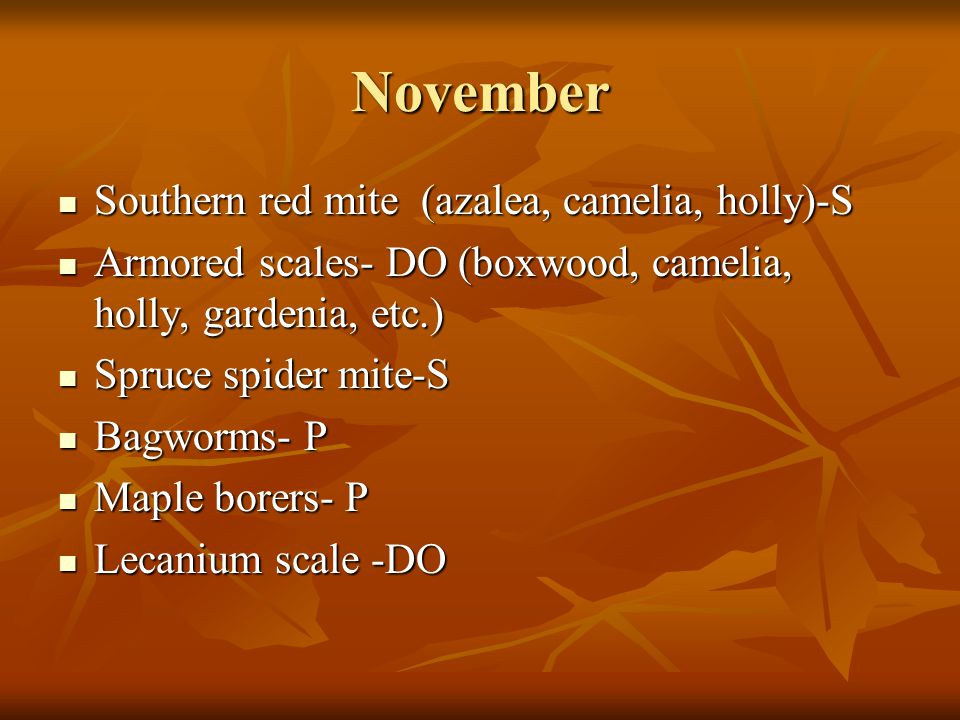 November Southern red mite (azalea, camelia, holly)-S