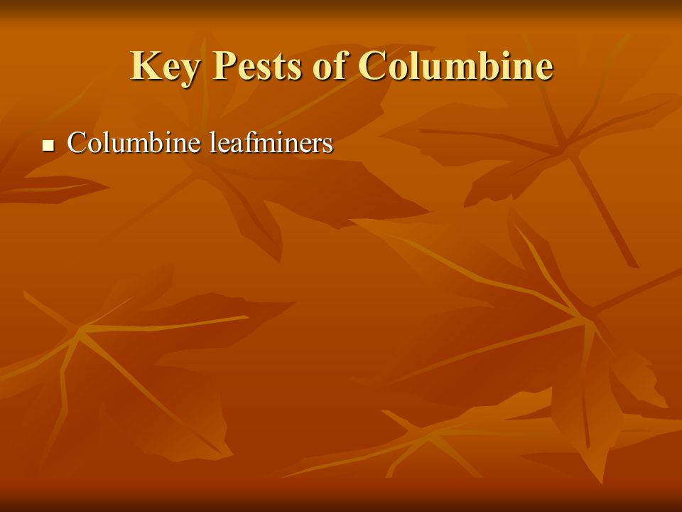 Key Pests of Columbine Columbine leafminers
