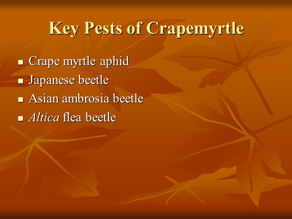 Key Pests of Crapemyrtle