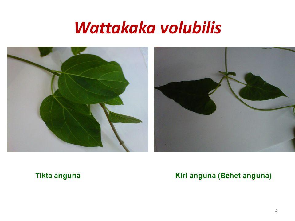 Wattakaka volubilis Tikta anguna Kiri anguna (Behet anguna)