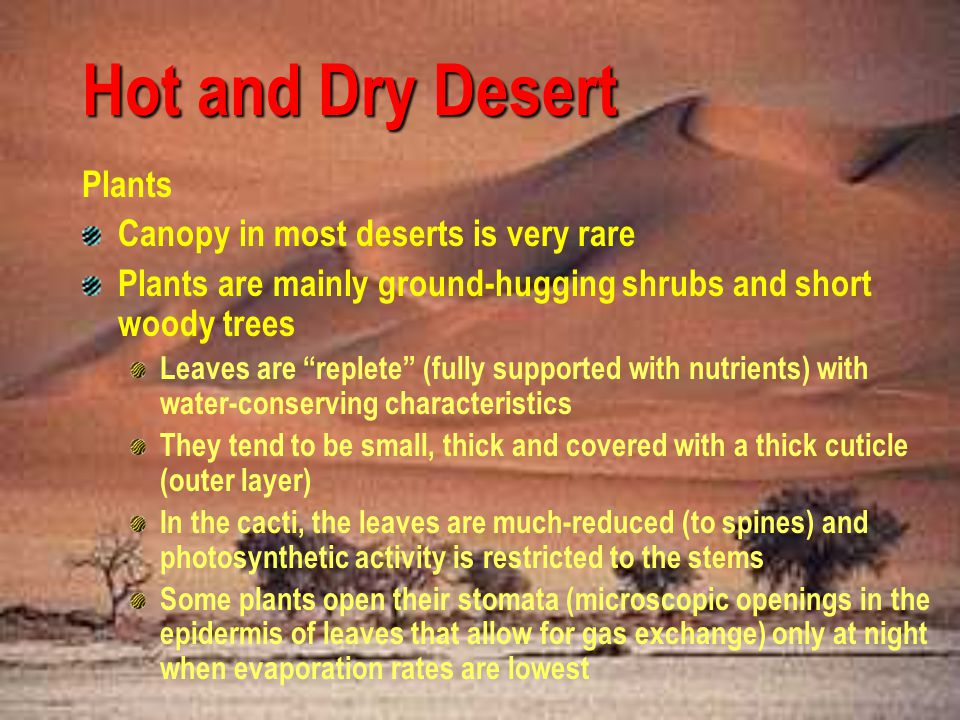 Hot and Dry Desert Plants Canopy in most deserts is very rare